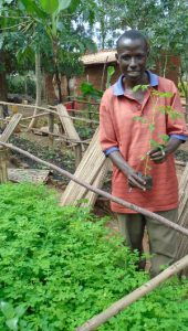Forestry Assistant with Moringa seedlings